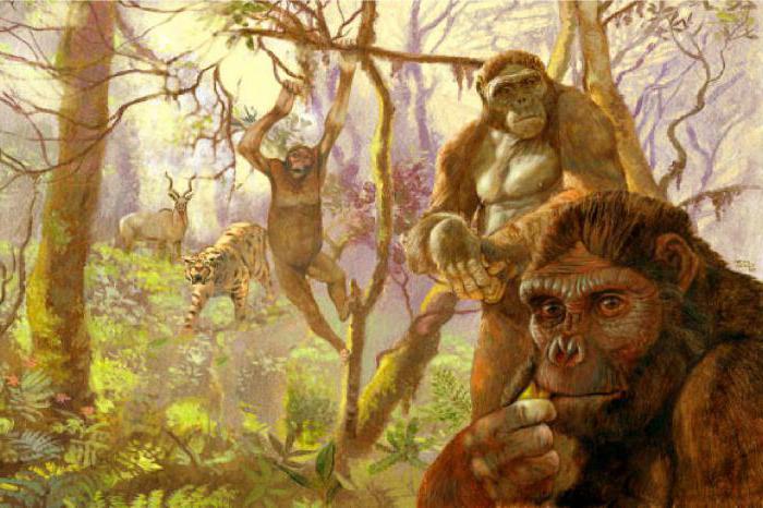 древние обезьяны от которых произошел человек
