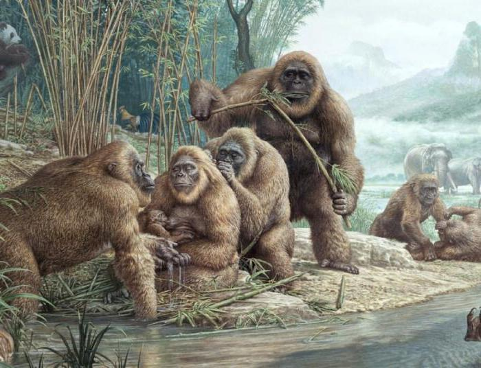 древние обезьяны гиганты
