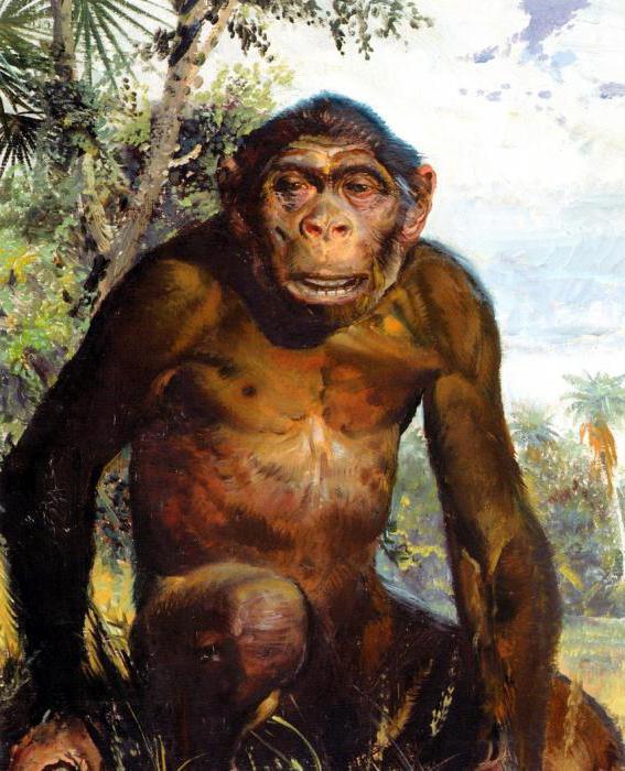 древние обезьяны дриопитеки