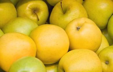 сорт яблок медовое фото