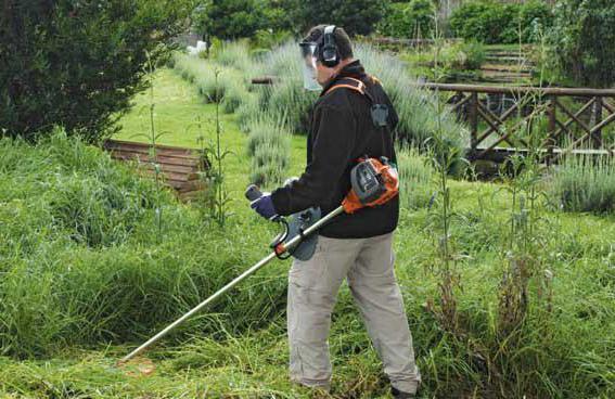 Как избавиться от клена на огороде навсегда