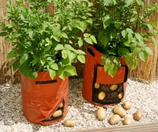 посадка картофеля в мешках