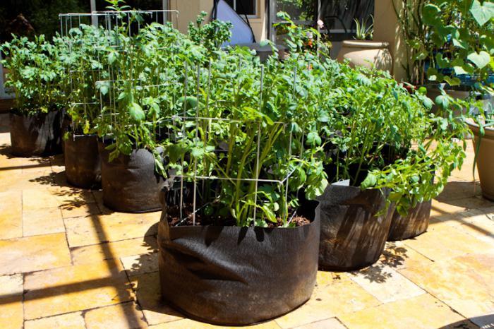 как вырастить картофель в мешках