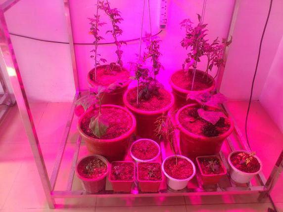 фитолампы для растений своими руками