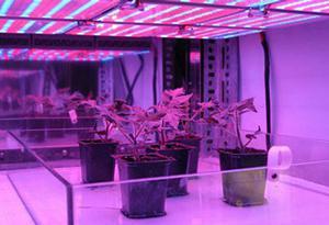 фитолампы для растений своими руками фото