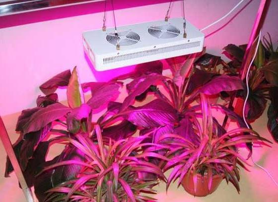 самодельные фитолампы для растений