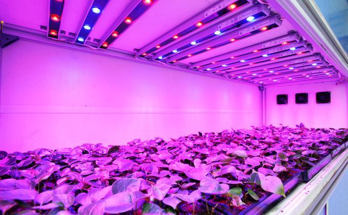 фитолампы для комнатных растений