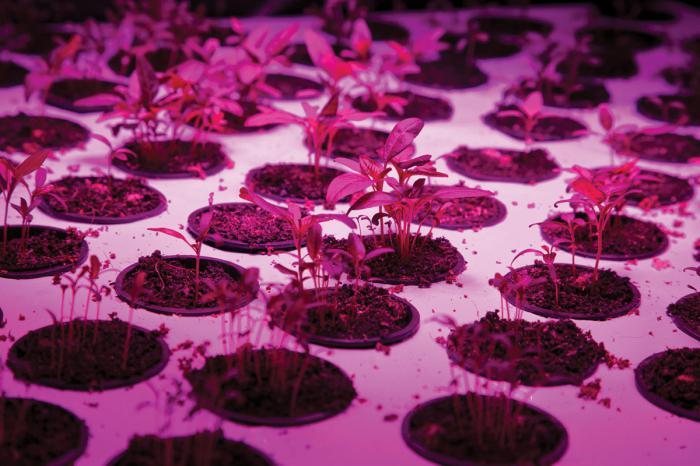 фитолампы для комнатных растений светодиодные