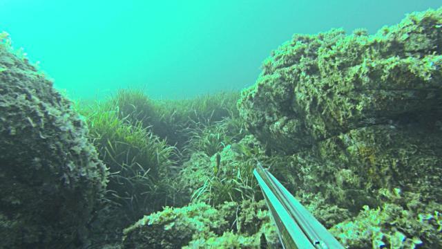 ружье арбалет для подводной охоты