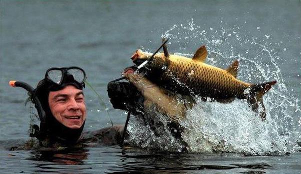 лучшие арбалеты для подводной охоты