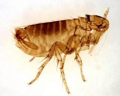 опасны ли паразиты человека
