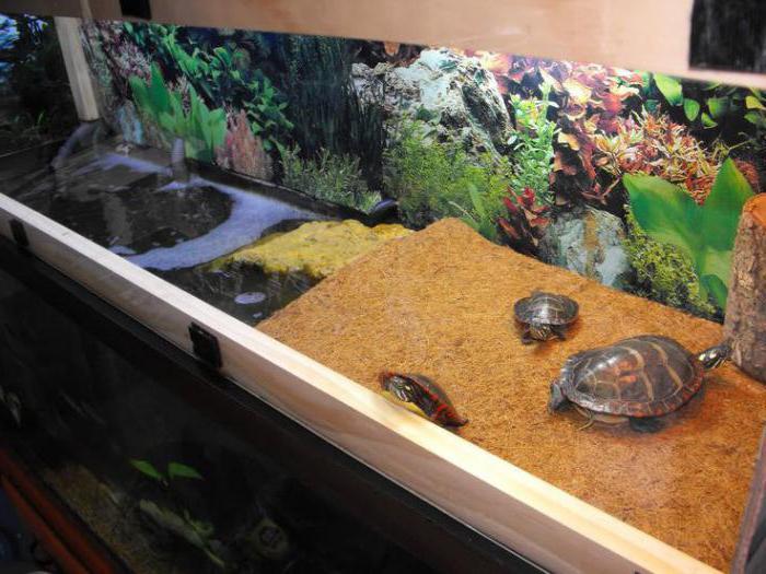 Как можно сделать островок для красноухой черепахи своими руками 708