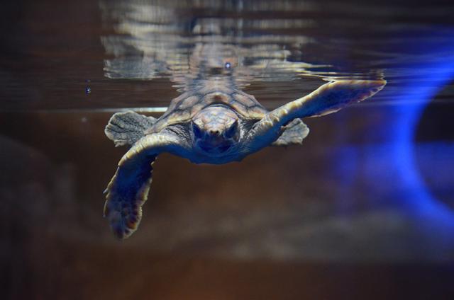 сделать островок для красноухой черепахи своими руками
