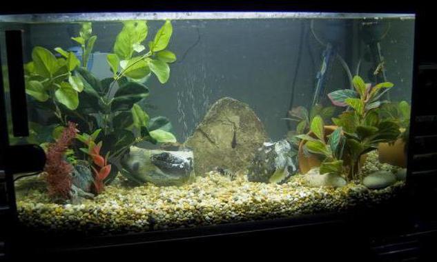 как охладить воду в аквариуме летом