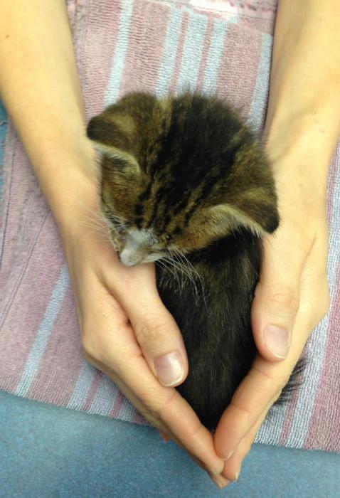 Понос с кровью у кота: причины и лечение