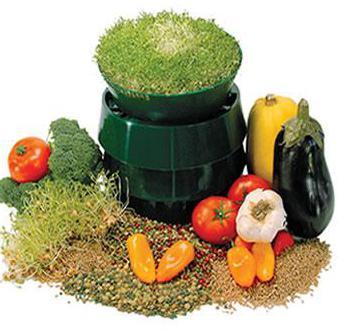как правильно проращивать гречку