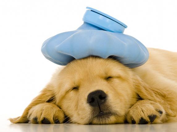 собака после антибиотиков