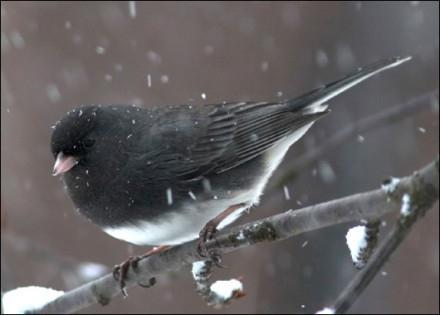 как помогать птицам зимой