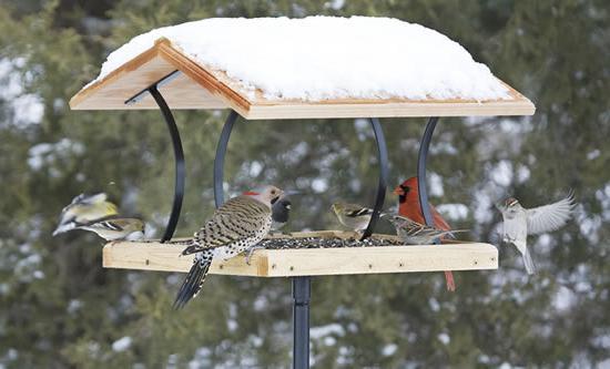 проект помоги птицам зимой