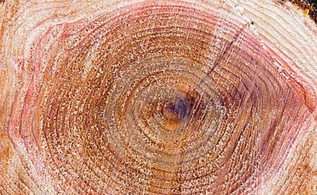 свойства древесины липы
