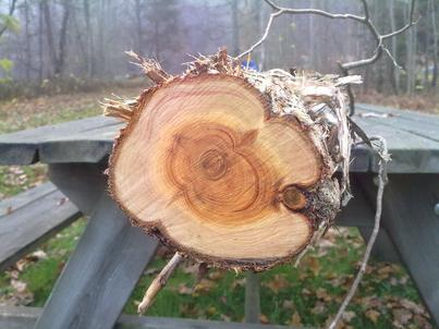 физико механические свойства древесины