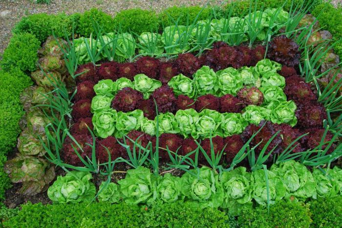 овощи растущие в тени