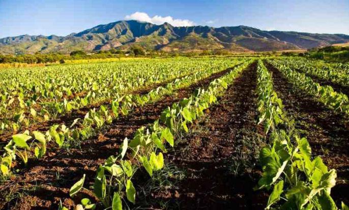 Какие профессии выращивают овощи