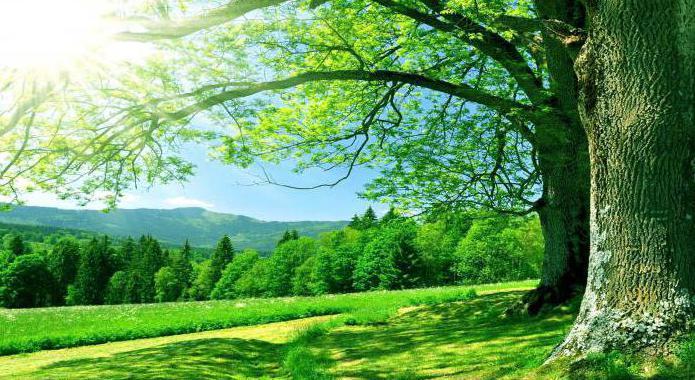 зеленый цвет психология цвета