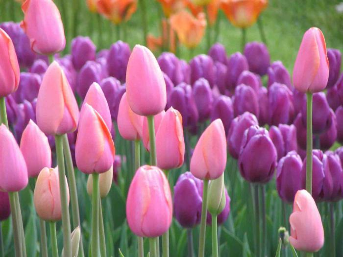 Любимые цветы и ваш характер. Как определить характер ...