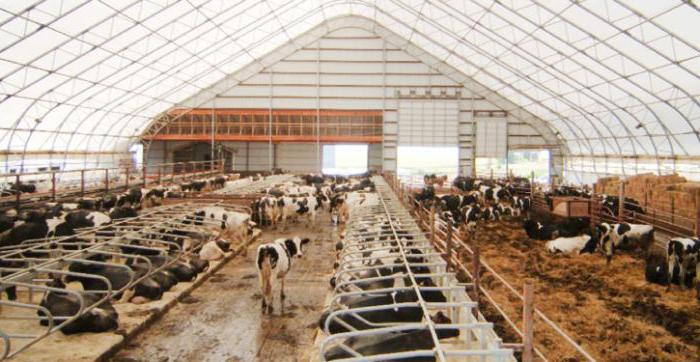 Размер стойла для коровы привязной тип содержания