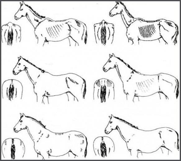 средний вес лошади взрослой