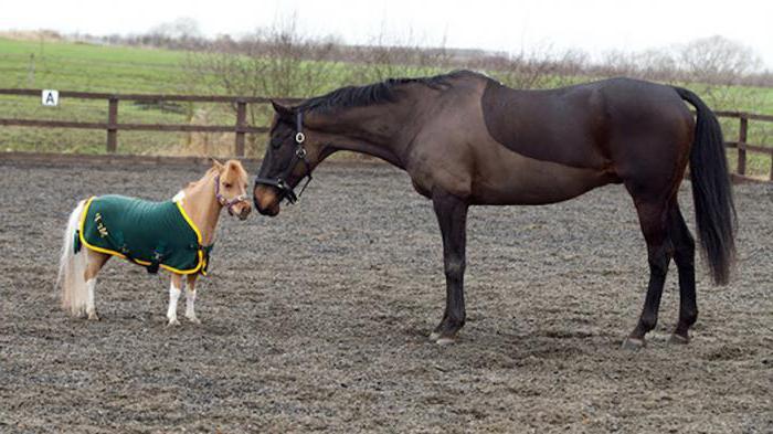 сколько весит лошадь средний вес