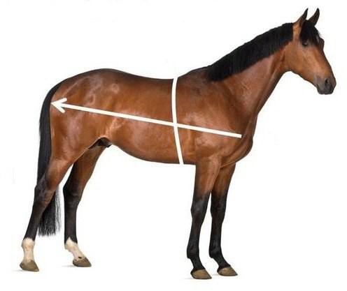 вес лошади в среднем