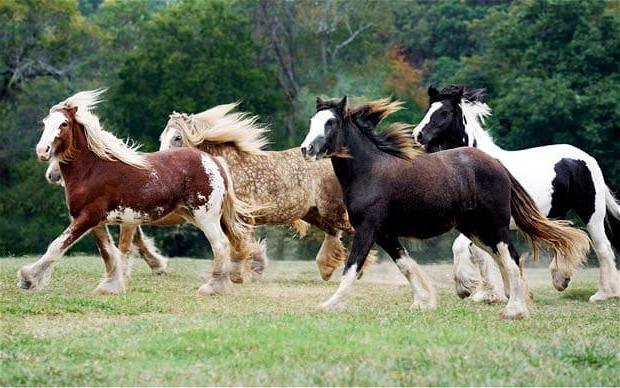 пегий конь это какой цвет