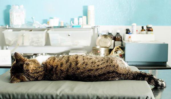 уретростомия у котов отзывы