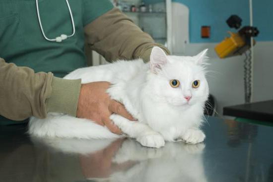 уретростомия у кота уход после операции