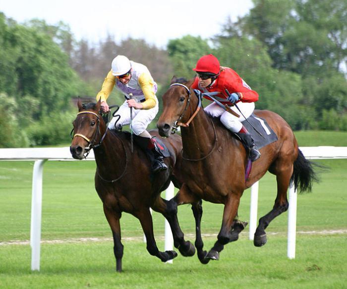 Чистокровная верховая лошадь (фото)