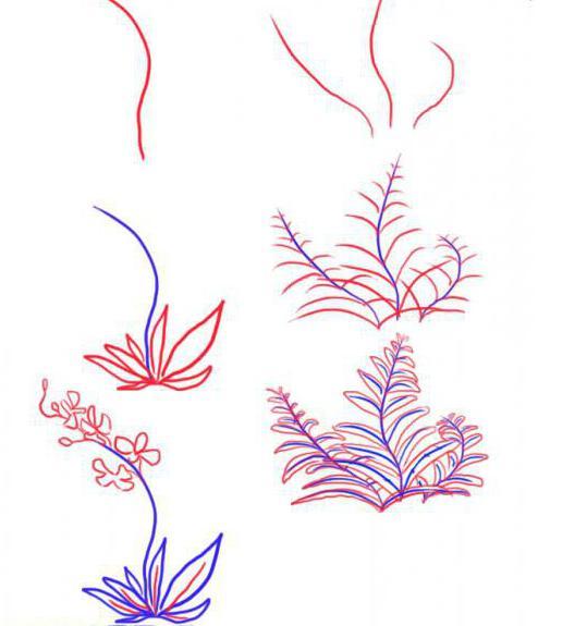 как нарисовать цветок папоротника