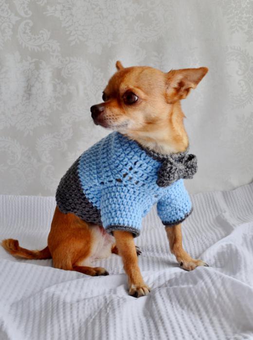 Вязать свитер собаке