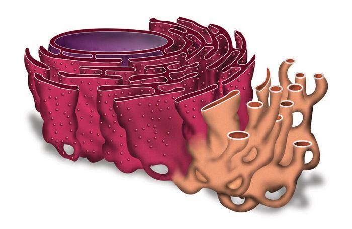 Этапы биосинтеза белка таблица