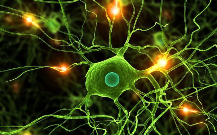 свойства нервной ткани