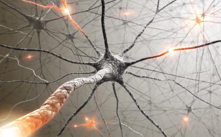 нервная ткань человека