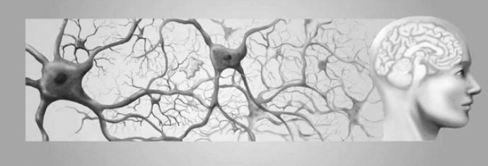 нервная ткань виды тканей