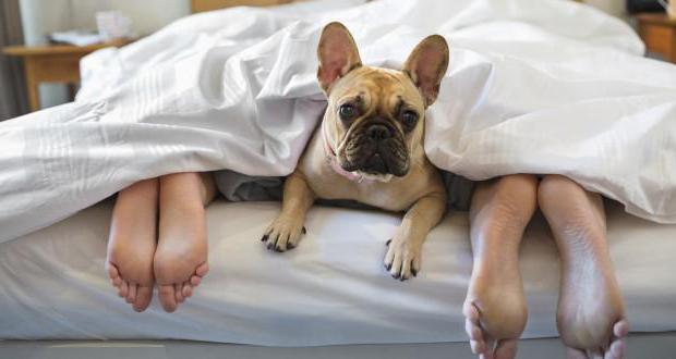 Блохи в постельном белье