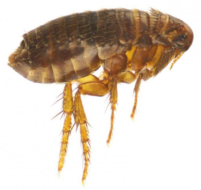 яйца паразитов человека фото