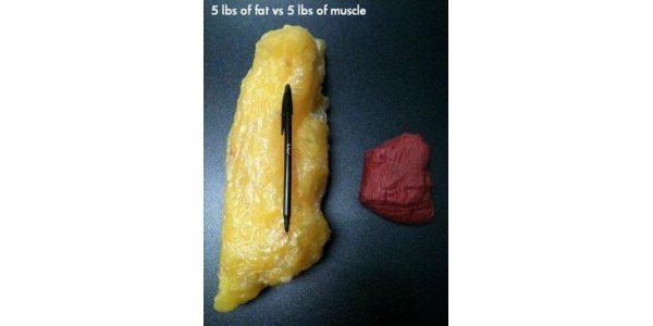 как похудеть на 10 кг без спорта