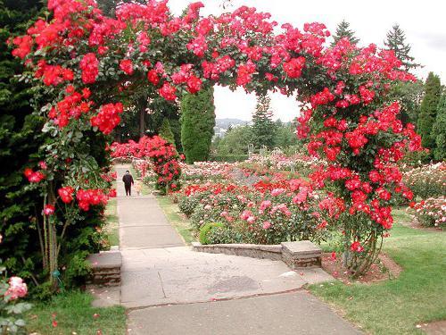 садовые шпалеры