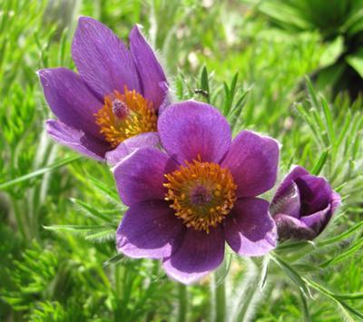 Весенние цветы фото