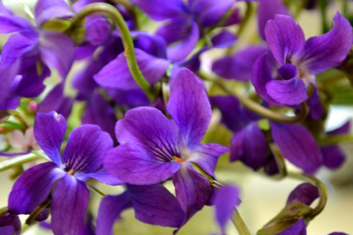 Какие многолетние цветы сажать на даче 961
