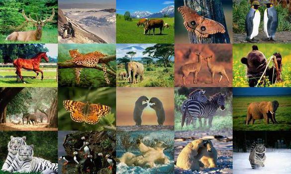Типы животных. Классификация
